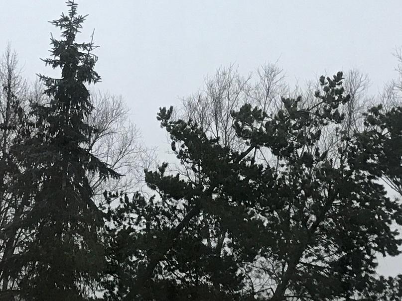Waldstudie